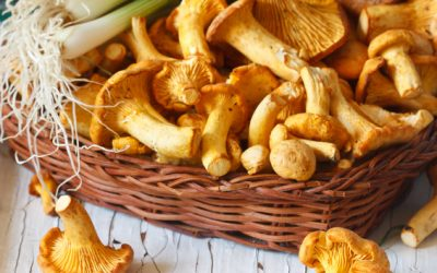 Chanterelle mushrooms and vegetables on an old wooden board.