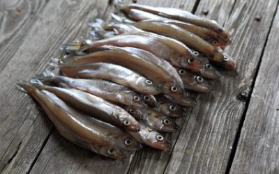 Crude shallow saltwater fish - smelt, on the old board. selective focus
